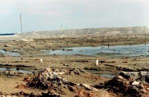 Reclaimed Swamp Land